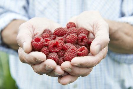 freshly picked: Close Up Of Man Holding Freshly Picked Raspberries
