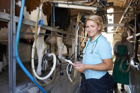 leche y derivados: Vet Inspecci�n de Ganado mientras est�n en orde�e
