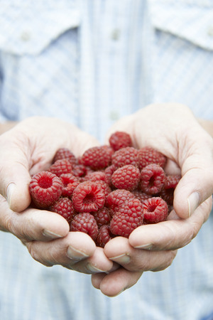 allotment: Close Up Of Man Holding Freshly Picked Raspberries