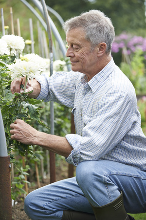 cultivating: Senior Man Cultivating Flowers In Garden Archivio Fotografico