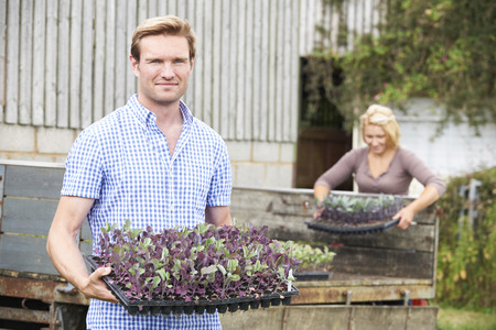 old fashioned vegetables: Couple Planting Seedlings On Organic Farm