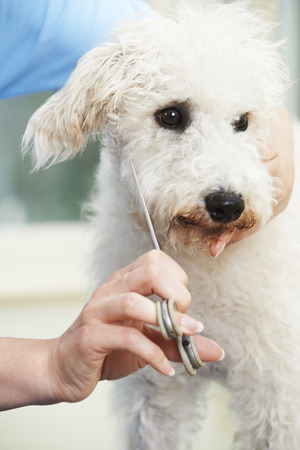 lurcher: Pet Dog Being Professionally Groomed In Salon