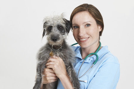 lurcher: Studio Portrait Of Female Veterinary Surgeon Holding Lurcher Dog