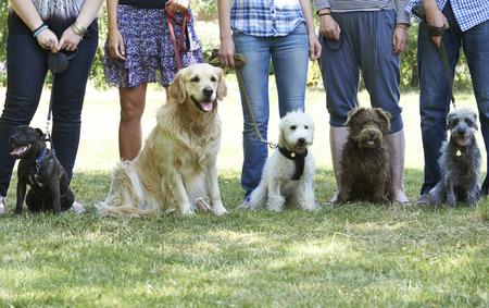 Grupp av hundar med ägare på lydnadsklass