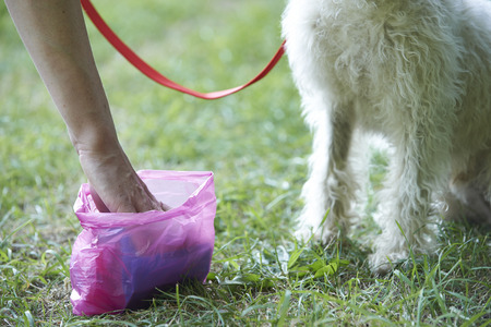 lurcher: Owner Clearing Dog Mess With Pooper Scooper
