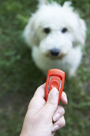 Pet Owner Training Dog Using Clicker