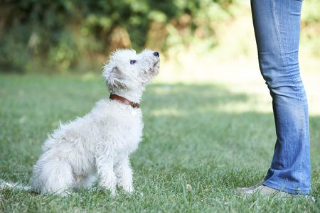 Dog Owner Teaching Pet Lurcher To Sit Standard-Bild