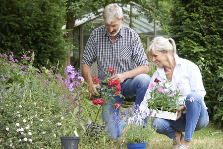 Mature Couple Planting Out Plants In Garden