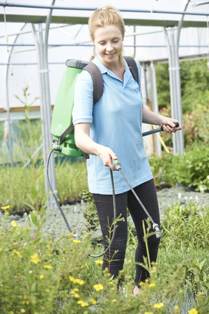tuincentrum: Young Woman Spraying Plants In Polytunnel At Garden Center Stockfoto