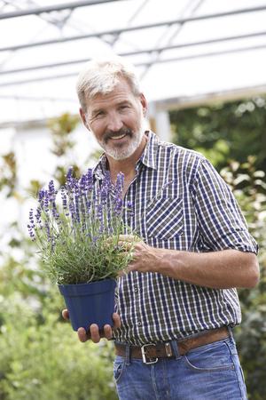 choosing: Mature Man Choosing Plants At Garden Center