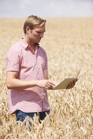 genetically modified crops: Farmer Inspecting Crops In Field Using Digital Tablet Stock Photo