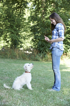 lurcher: Dog Owner Teaching Pet Lurcher To Sit Stock Photo