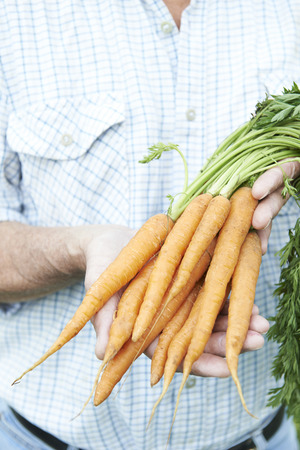 holding close: Close Up Of Man Holding Freshly Picked Carrots