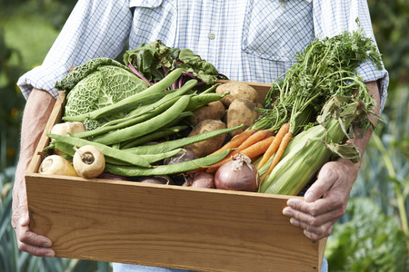 repollo: Verduras cerca del hombre en la asignación con Box Of Home Grown Foto de archivo
