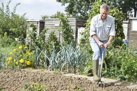野菜畑で割当てを掘り年配の男性
