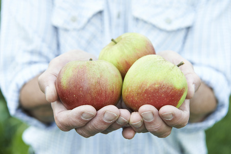 freshly picked: Close Up Of Man Holding Freshly Picked Apples Stock Photo