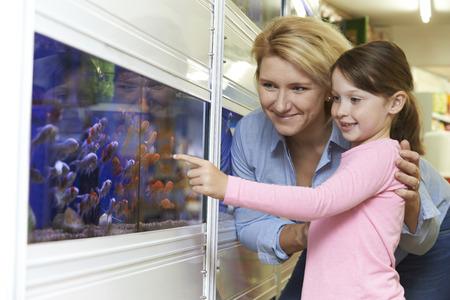 peces de colores: Madre e hija Elegir Goldfish en la tienda de mascotas
