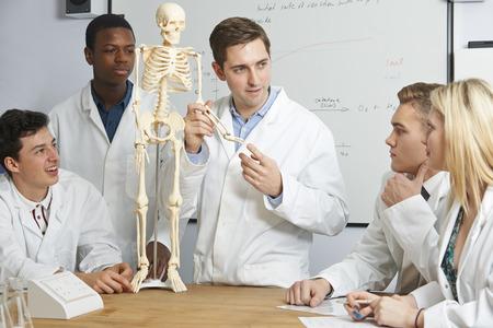 Leraar met model van menselijk skelet in Biology Class