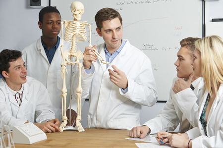 Teacher With Model Of Human Skeleton In Biology Class Stock Photo