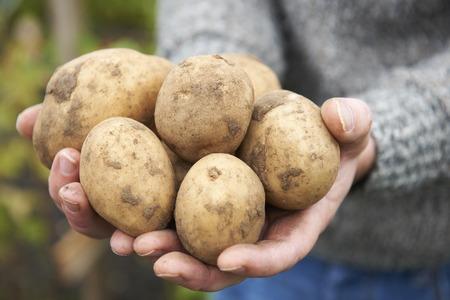 home grown: Man Holding Home Grown Potatoes