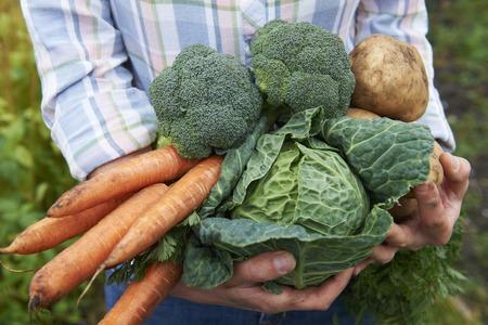 repollo: Mujer que sostiene Fresh Produce Dug Del Jardín