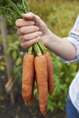 home grown: Woman Holding Bunch Of Home Grown Carrots