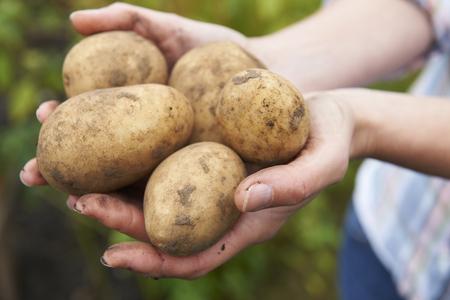 home grown: Woman Holding Home Grown Potatoes