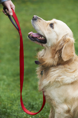 Dog Obedience Training Stockfoto