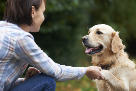 affectionate: Pet Golden Retriever And Owner Playing Outside Together