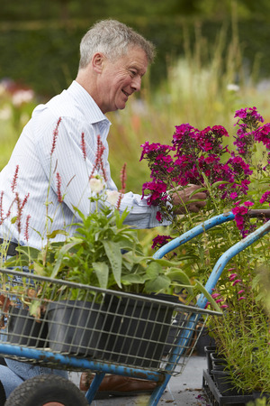 choosing: Senior Man Choosing Plants At Garden Centre Stock Photo