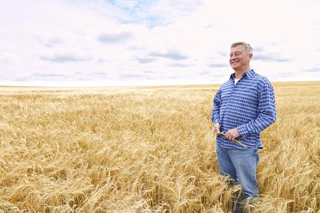 Agriculteur Champ de blé récolte Inspection
