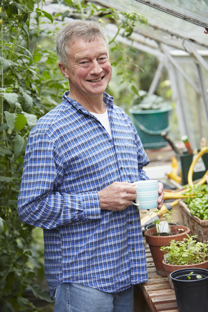 coffee crop: Senior Man In Greenhouse With Hot Drink