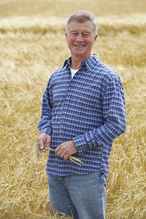 cultivo de trigo: Cultivo de trigo Granjero que revisa Foto de archivo