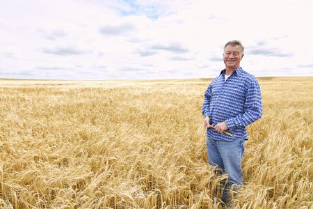 cultivo de trigo: Granjero en campo de trigo de la cosecha Inspección