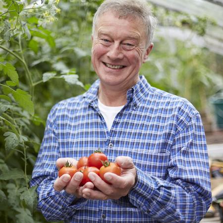 ancianos felices: Hombre Mayor En Invernadero Con Home Grown Tomatoes