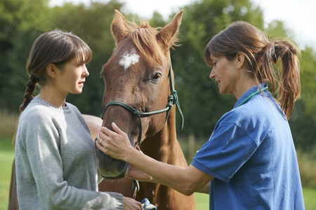 Female Vet Examining Horse In Field With Owner Фото со стока