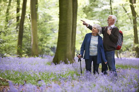 guy with walking stick: Senior Couple Walking Through Bluebell Wood