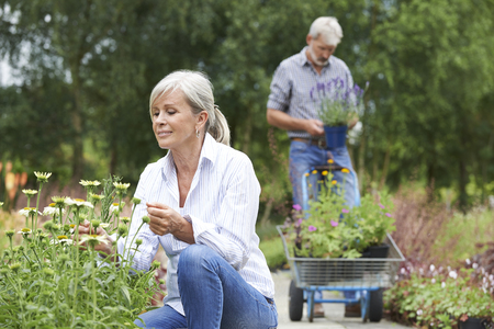 garden center: Mature Couple Shopping At Garden Centre