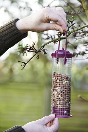 bird feeder: Man Hanging Bird Feeder In Garden Stock Photo