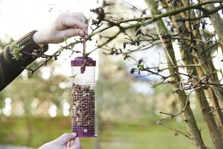 man nuts: Man Hanging Bird Feeder In Garden Stock Photo