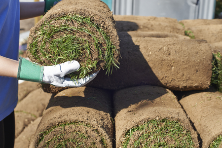 Close Up Of Landscape Gardener Laying Turf For New Lawn Stock Photo