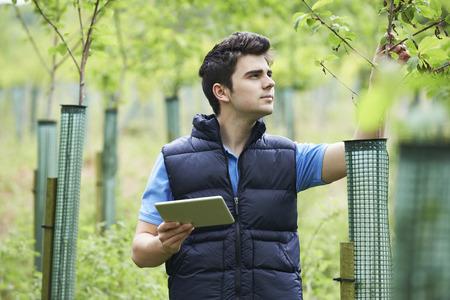 Travailleur Forestry Avec tablette numérique Vérification des jeunes arbres