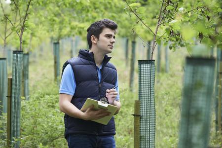 Trabajador de la silvicultura con el sujetapapeles Comprobación de los árboles jóvenes Foto de archivo