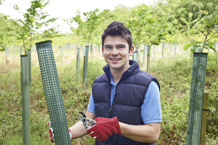 forestry: Forestry Worker Caring For Young Trees