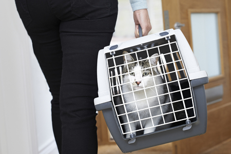 Woman Taking Pet Cat To Vet In Carrier Archivio Fotografico