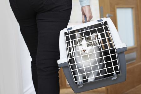 Femme Prendre Pet Cat Pour Vet Dans Transporteur Banque d'images