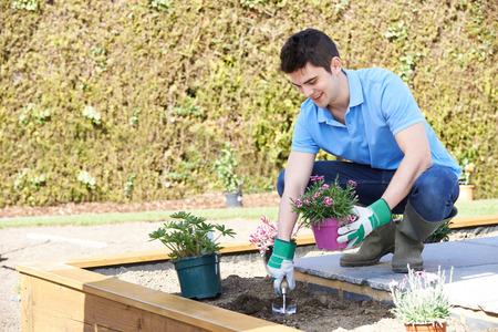 garden flower: Landscape Gardener Planting Flower Bed In Garden