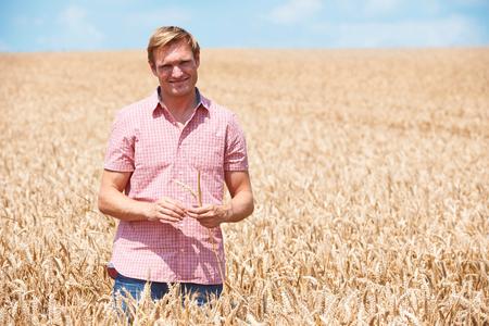 field crop: Farmer In Wheat Field Inspecting Crop