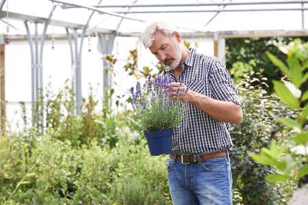 Mature Man Choosing Plants At Garden Center