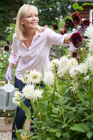Mature Woman Watering Dahlia Flowers In Garden At Home Stock Photo